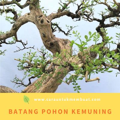 Batang Pohon Kemuning