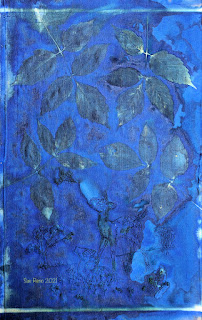 Sue Reno_wet cyanotype_image 914