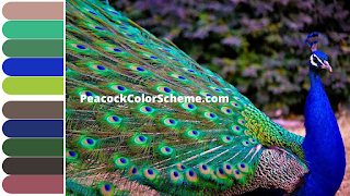 peacock blue color