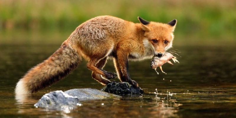 حيوانات آكلة اللحوم تتغذى على النباتات وكذلك الحيوانات الأخرى.