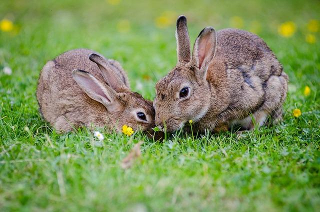 Giải mã ý nghĩa giấc mơ thấy con Thỏ