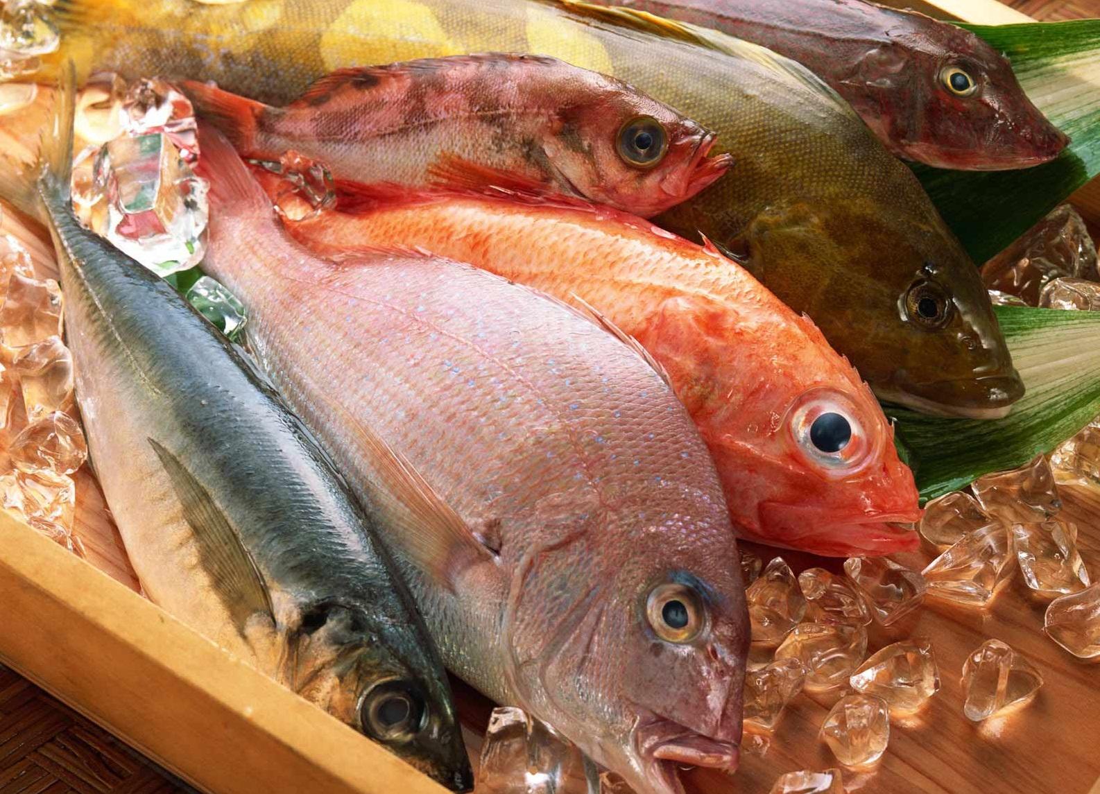 Jenis Ikan Laut Konsumsi Informasi Pancing Kita