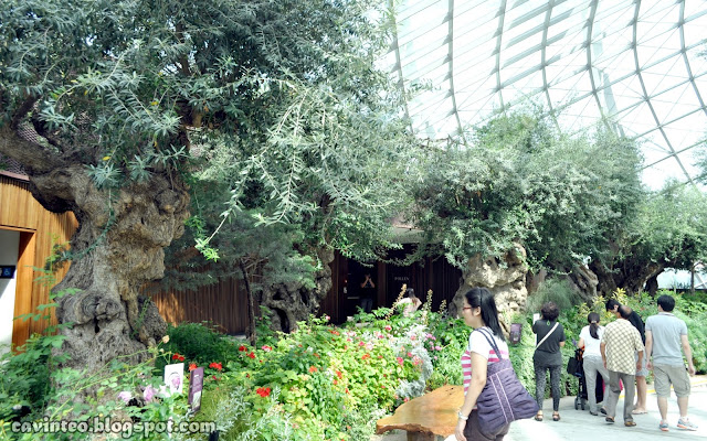 Entree Kibbles: Flower Dome [花穹] in the Daytime @ Gardens by the ...