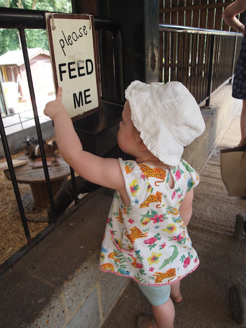 Godstone Farm, Surrey Review - feeding the animals