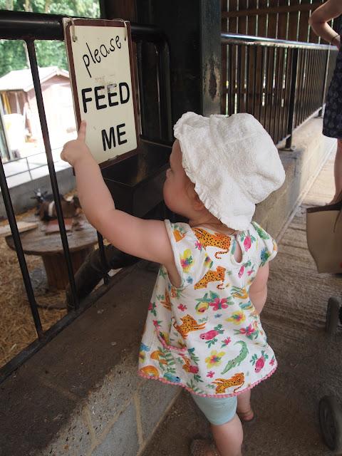 Godstone Farm, Surrey Review - feeding the animals