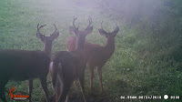 Whitetail Buck Hard Horned Mania and Behavior! 1