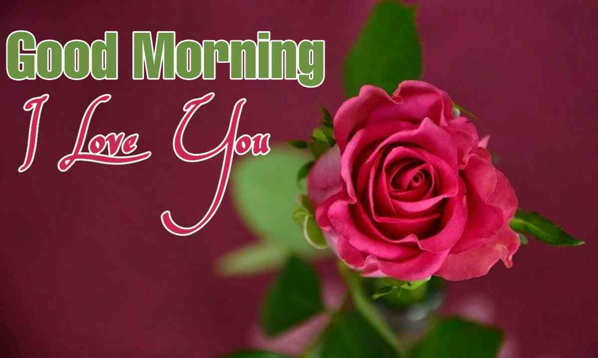 440 Good Morning Love Images Photos Pictures Download