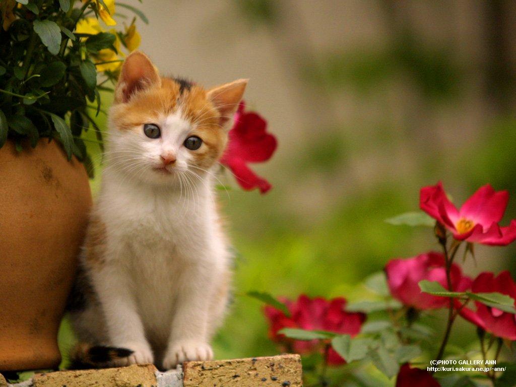 480 Gambar Binatang Kucing Anggora Lucu Terbaik