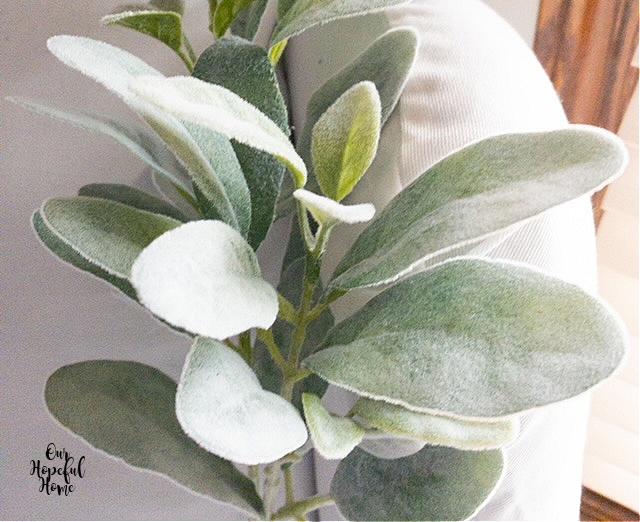 white fuzzy green lambs ear leaves plant
