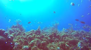 http://vikisbookblog.blogspot.de/2015/10/anderes-cayman-islands-tauchen.html