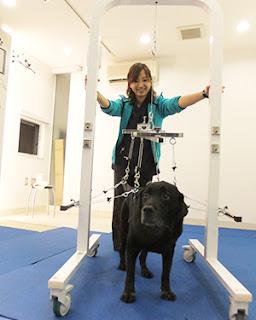 fisioterapia para cães voltar a andar