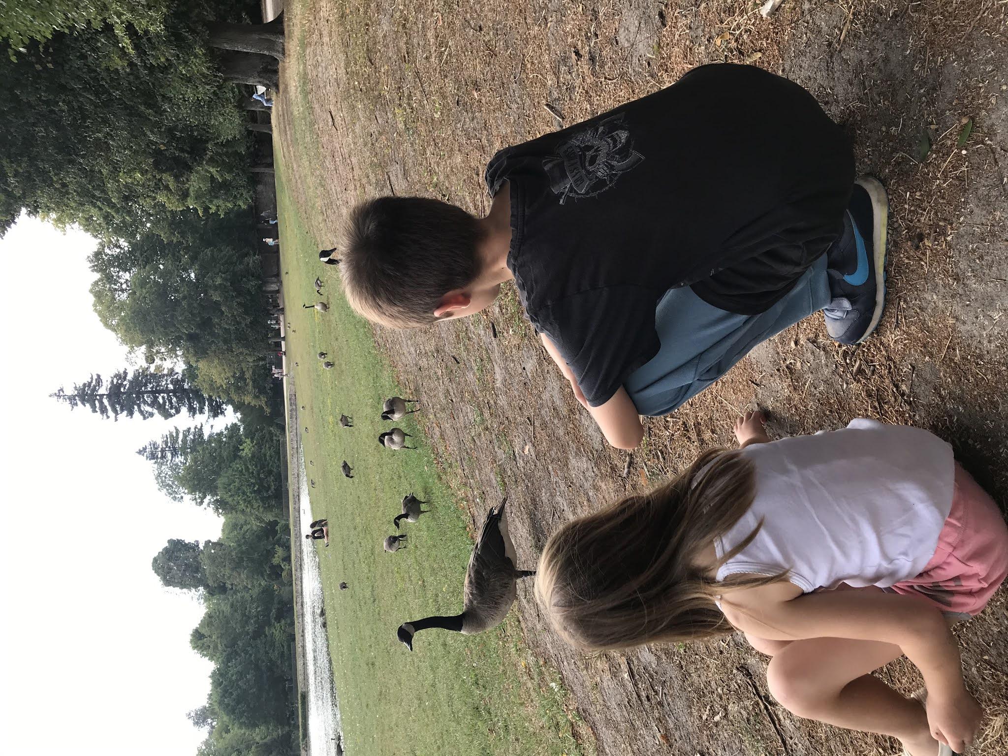 parc de rambouillet