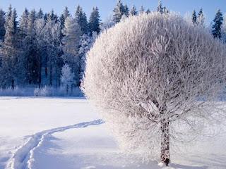 شجرة عليها ثلوج - شتاء 2020