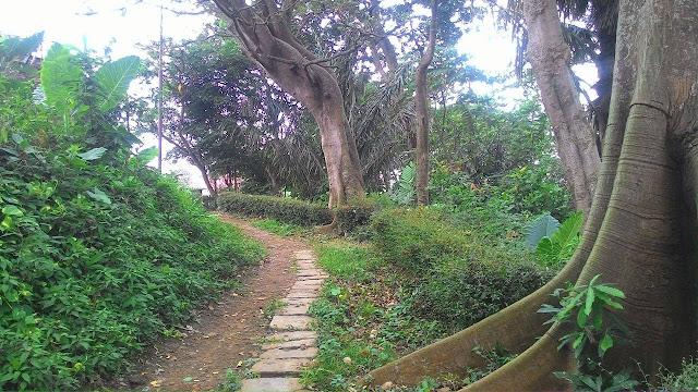Taman Monyet Bandar Lampung