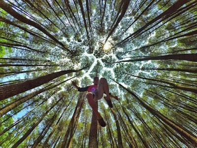 Hutan Pinus Jogja, Tempat Wisata Hits dan Instagramable Saat Ini