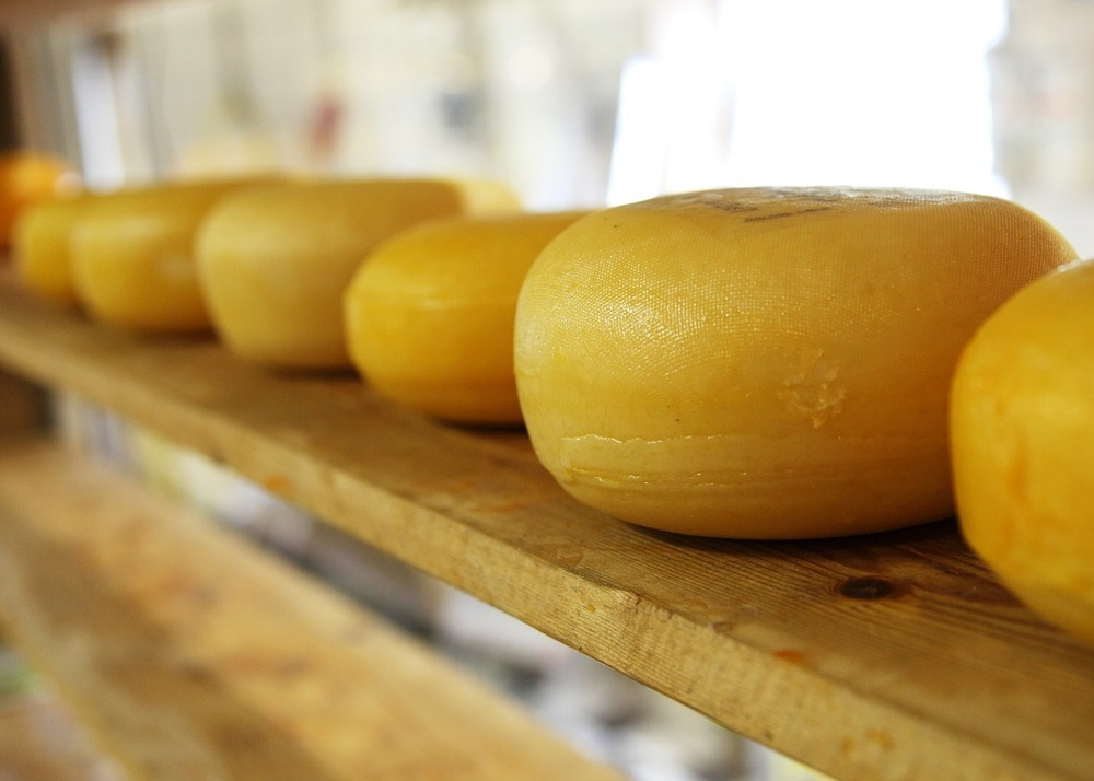 Own cheese dairy