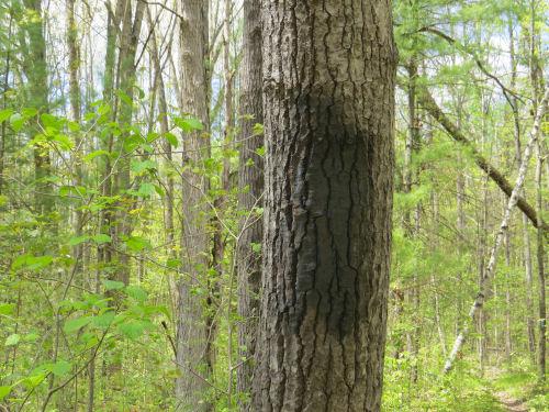 gray spray paint on a tree