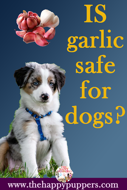 Treatment of garlic toxicity in dogs