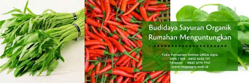 cara menanam cabe rawit, cabai, tanaman cabe, jual benih cabe, toko pertanian, toko online, lmga agro