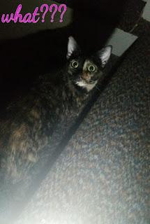 cat by flashlight