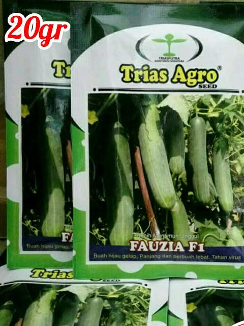 Benih Mentimun Hijau Unggul FAUZIA F1 Produk Trias Agro Seed