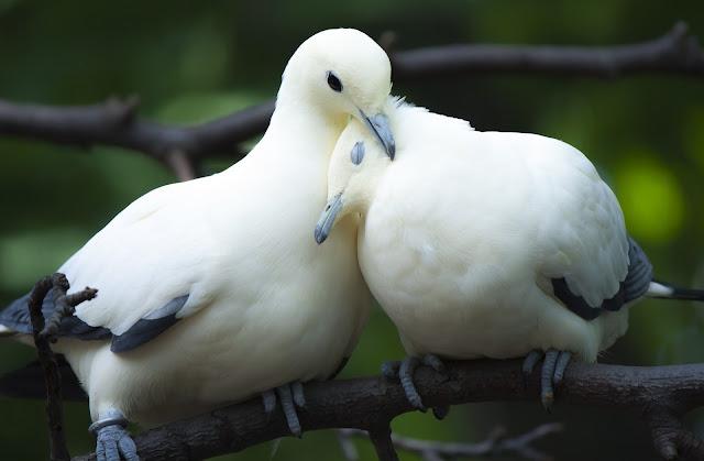 Aşk mı? Yoksa sevgi mi?