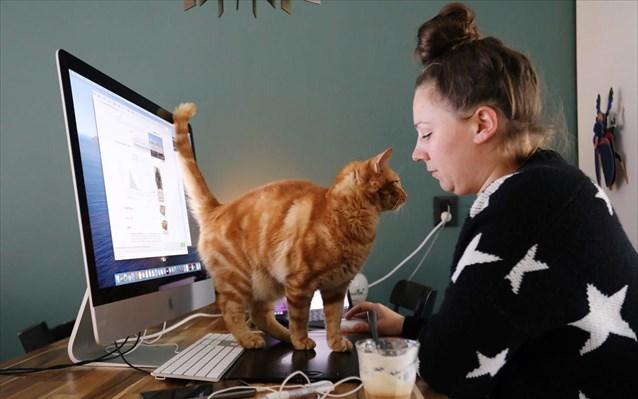Γιατί οι γάτες σαμποτάρουν την τηλεργασία και χοροπηδάνε στα πληκτρολόγια