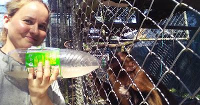 Dar de comer a los monos es una de las tareas de las personas voluntarias