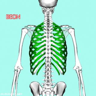 تقوية العظام ومنع الهشاشة