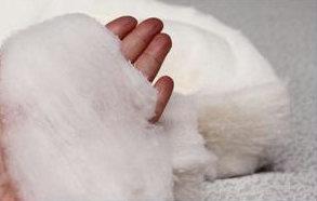 海島綿,Sea-Island cotton,海岛棉,