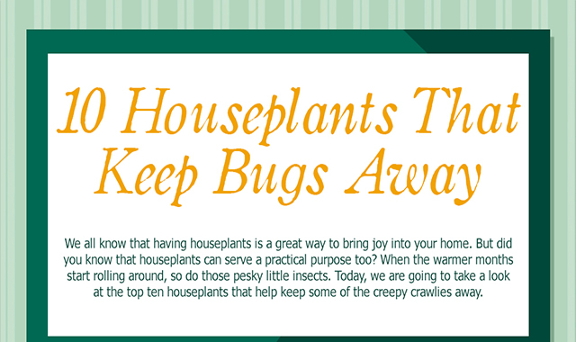 10 Houseplants keeping bugs out #infographic