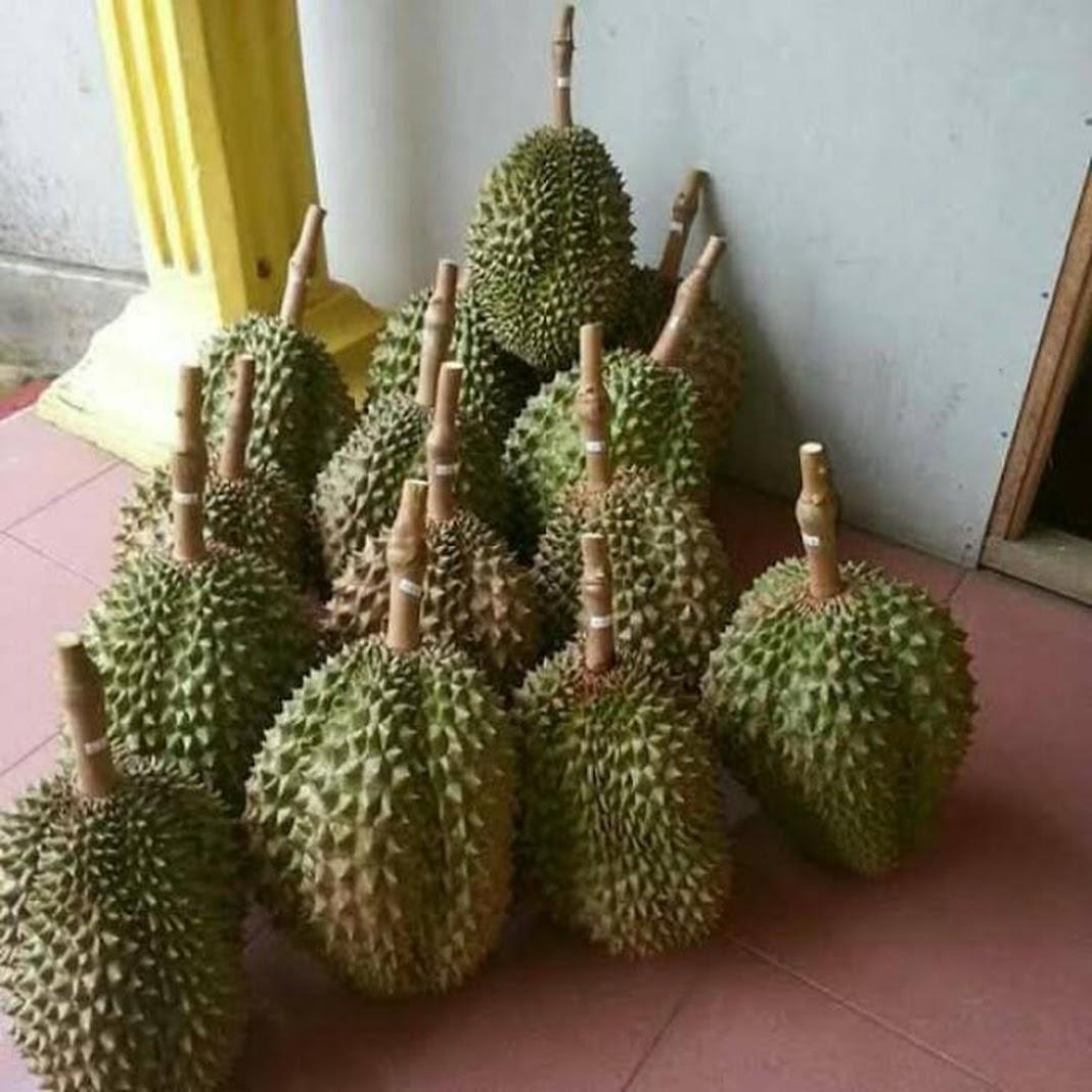 Bibit Durian Bawor super Gorontalo