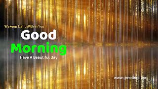 Image of natural morning light falling through trees.good morning message