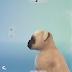 Gatos e Cães - Vídeo mostra como eles serão extremamente personalizáveis