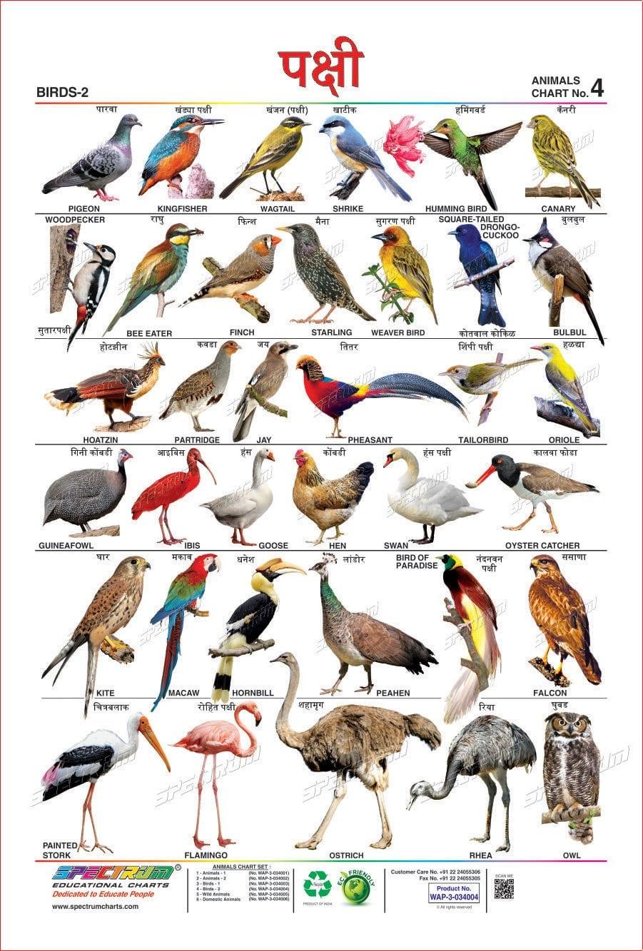 Birds Name in Marathi | पक्ष्यांची नाव मराठीत