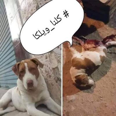 Wilca: symbole du nouveau massacre des chiens à Hoceima  Pour quelle somme, ils ont vendu leurs âmes ?!