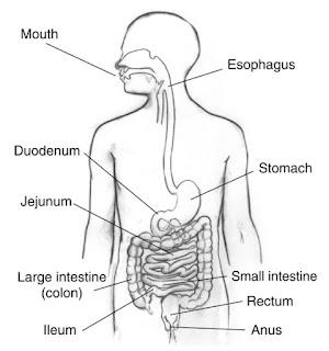Human-Digestive-System-in-Hindi