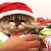 Απολαυστική συλλογή με Χριστουγεννιάτικα fails (video)
