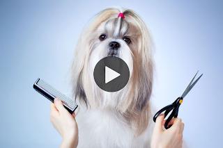 Mascota en peluquería canina