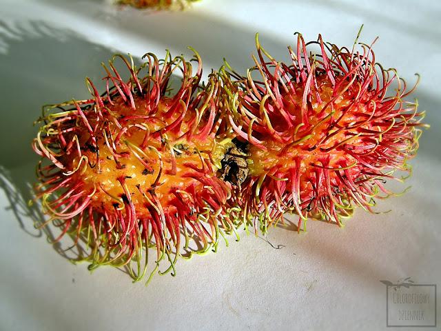 Jagodzian rambutan (Nephelium lappaceum) - owoce, włochate, podobne do liczi, różowe.