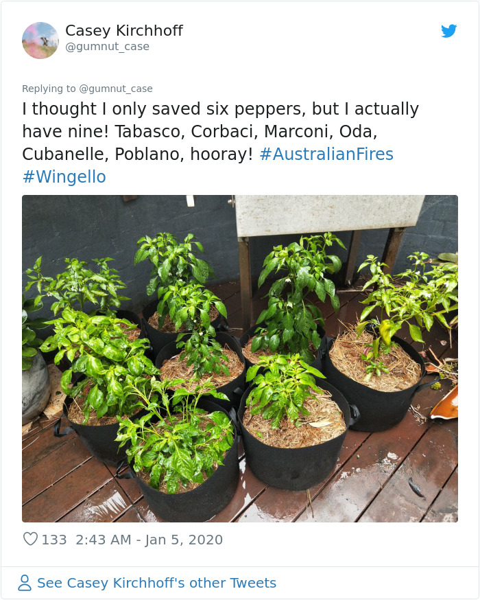 Woman Shares A Heart-Wrenching Story About How The Australian Fires Destroyed Her Home But Not Her Greenhouse