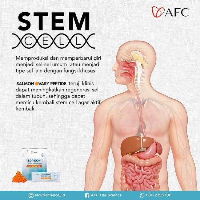Agen Jual: SOP Subarashi Stem Cell, SOP 100 Diabetes, di United Arab Emirates