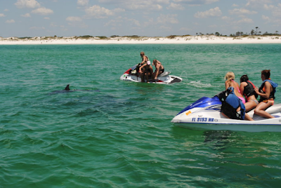 Shell Island Dolphin Tour on Waverunners