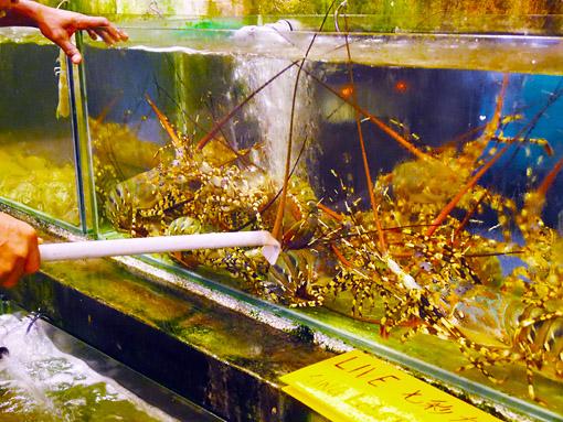 some high end sea food