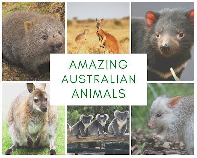 Australian Animal pictures