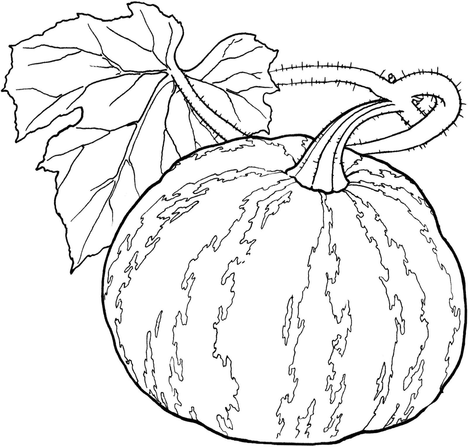 Atelie Coloriz Desenhos Vegetais