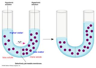 Difusi dan Osmosis terjadi pada cairan yang memiliki konsentrasi berbeda