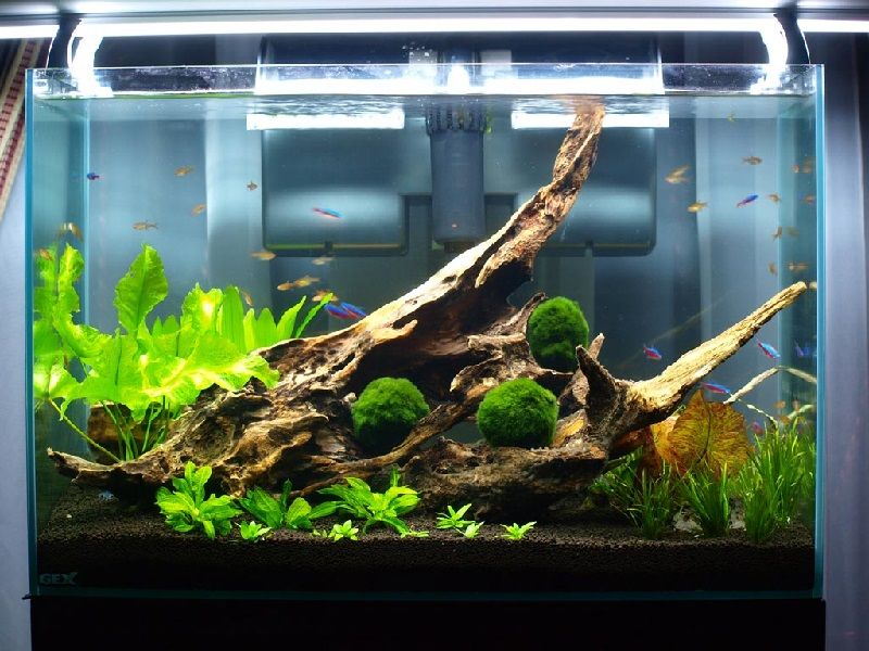 Gambar Daftar Harga Aquarium Kaca Untuk Ikan Hias