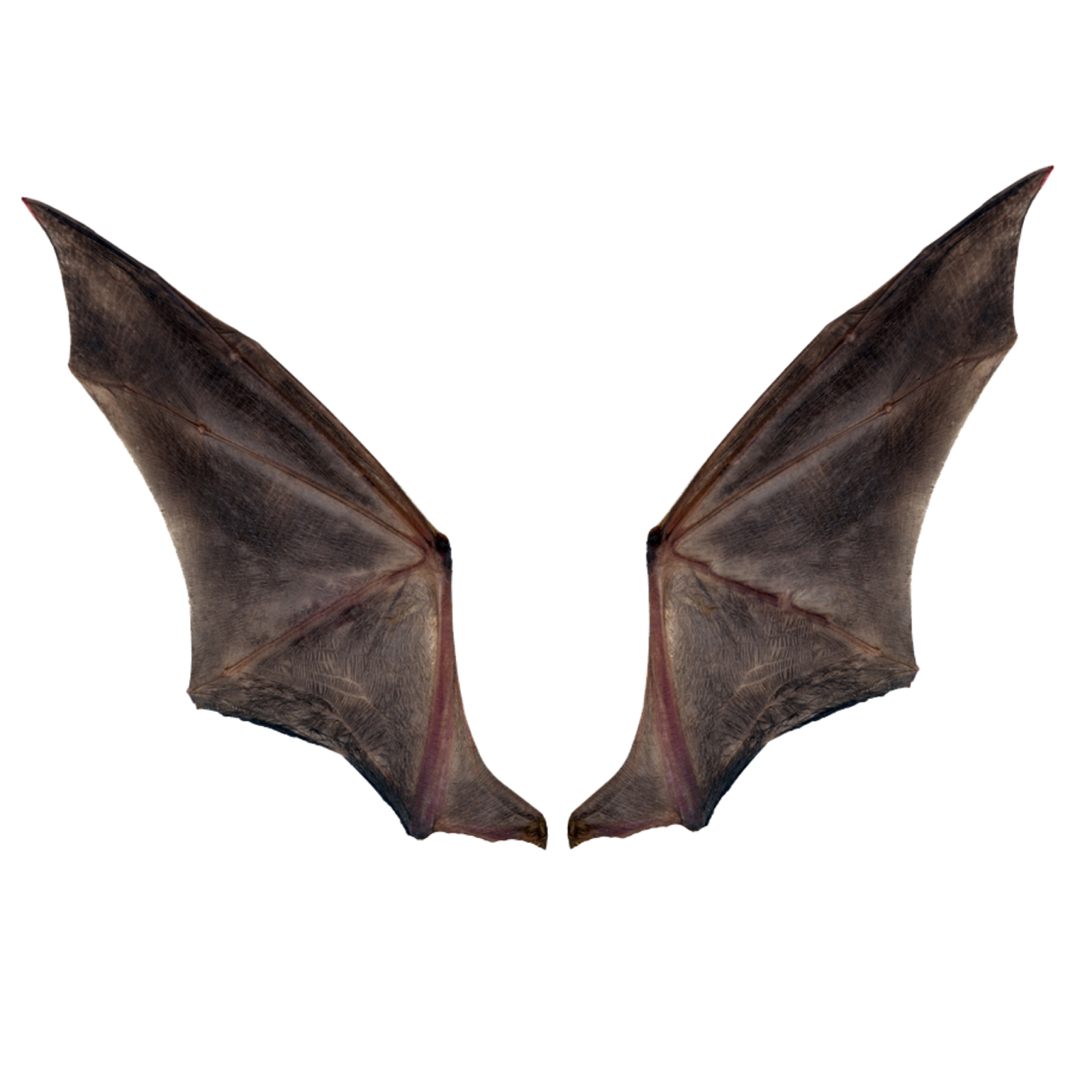 Devil Wings Background & Png Download Free For Photo