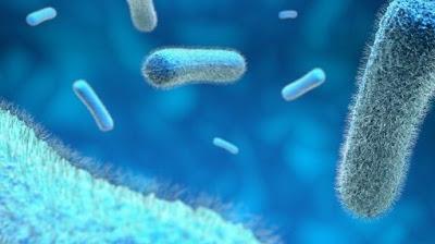 Gambar Bakteri Salmonella